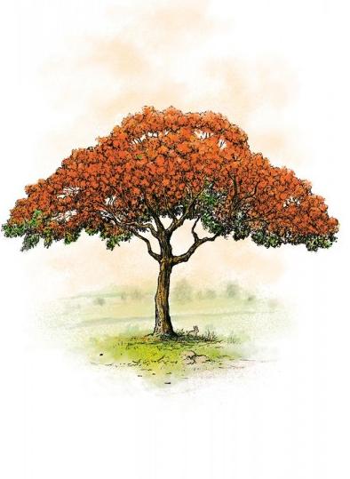 Arboretum, illustration du jeu © Filosofia