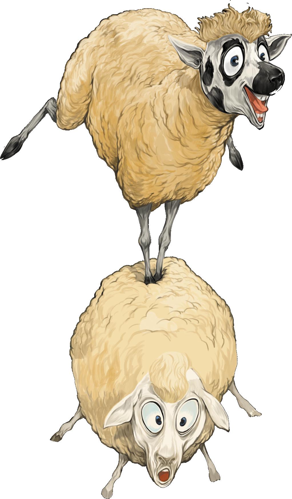 Te Kuiti, deux joyeux moutons (illustration de couverture) © Ludibay